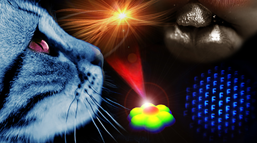 Smart Compound Eyes Enable Tunable Imaging