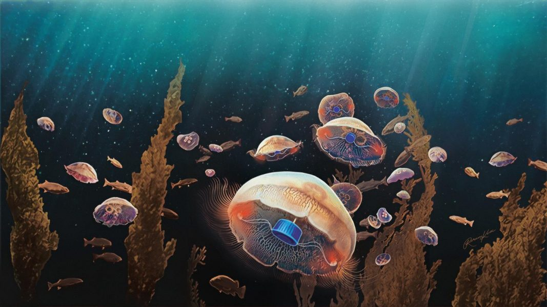 Bionic jellyfish to explore our oceans
