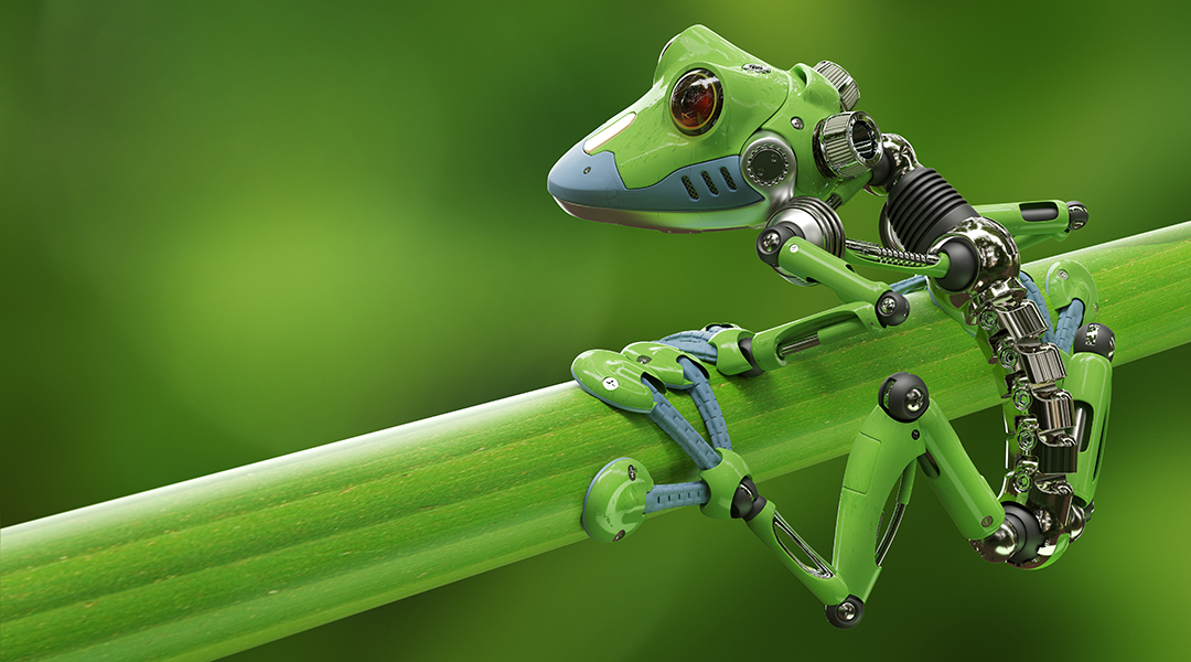 Team builds first living robots using frog stem cells