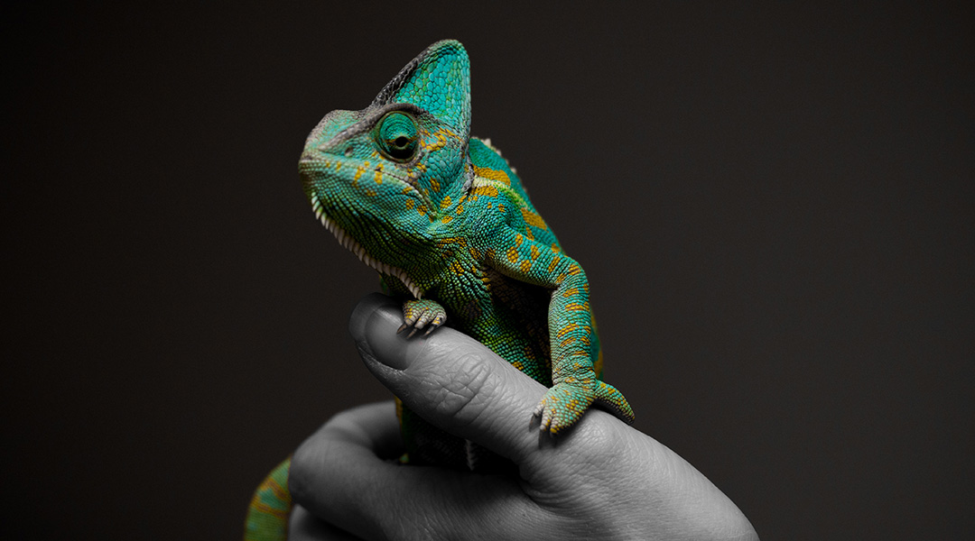 Chameleon metals change their surface structure in response to heat