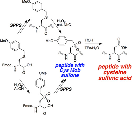 synthesis of peptide with cysteine sulfinic acid