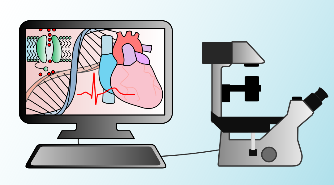 Calibrating computer models at the heart of cardiac research