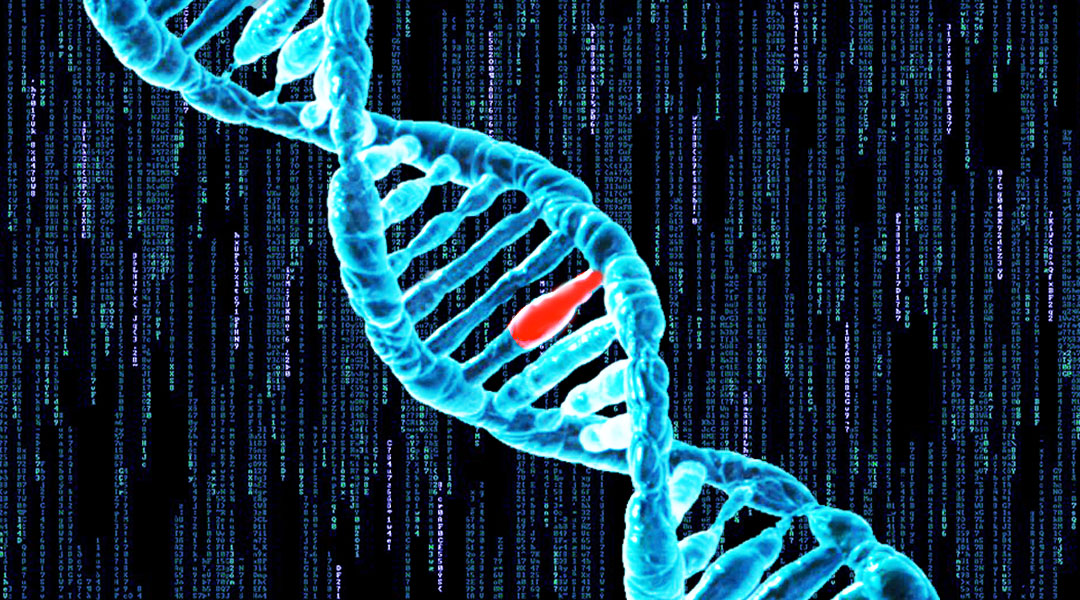 Computer modeling reveals details of how cells fix damage to our DNA