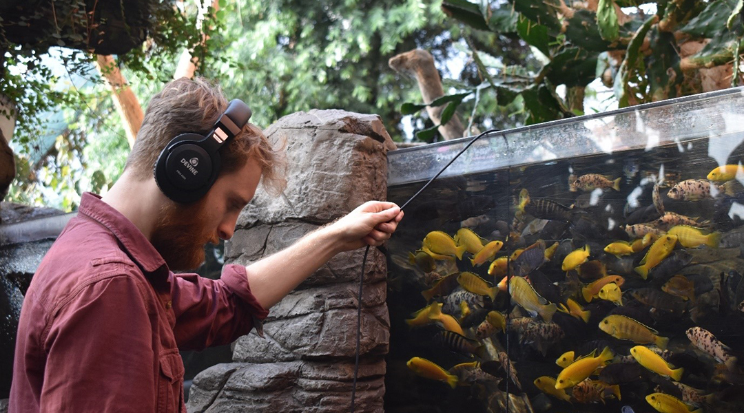 Ecoacoustics: A new way to survey freshwater ecosystems