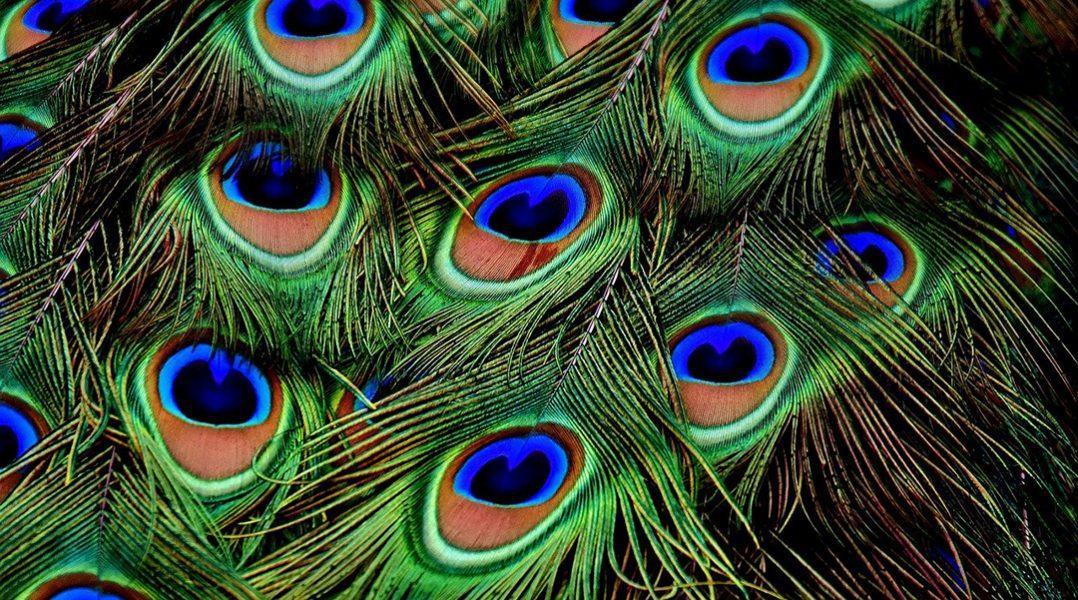 Pretty like a peacock: Graphene-based smart sensors