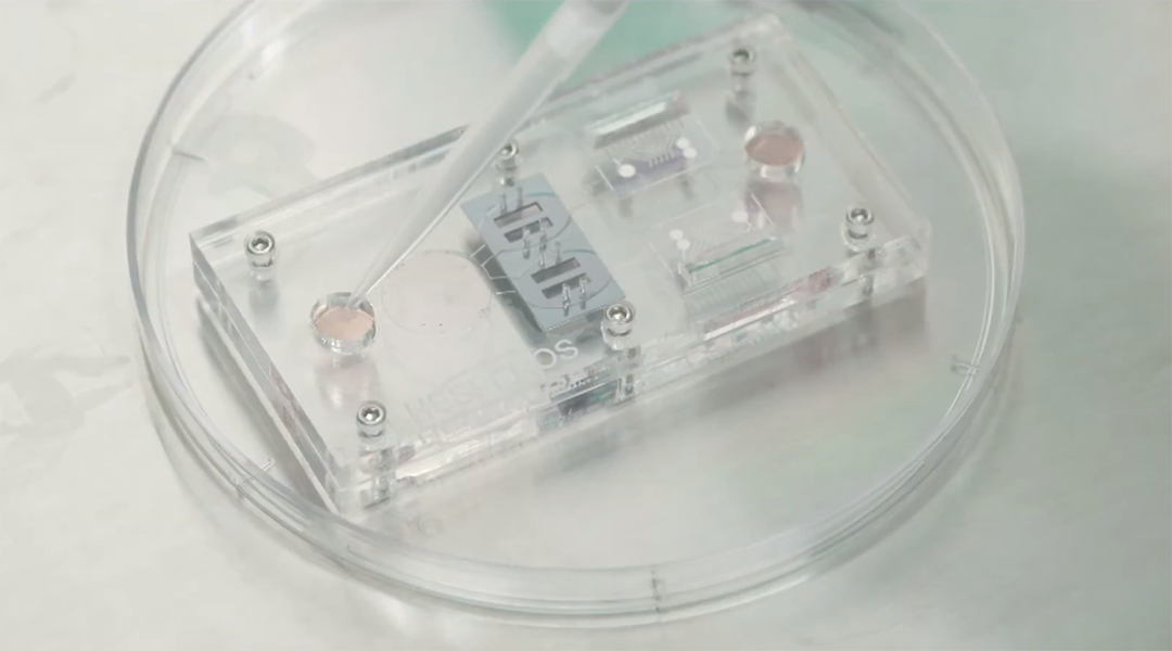 Human-on-a-chip provides an accurate model for the immune system