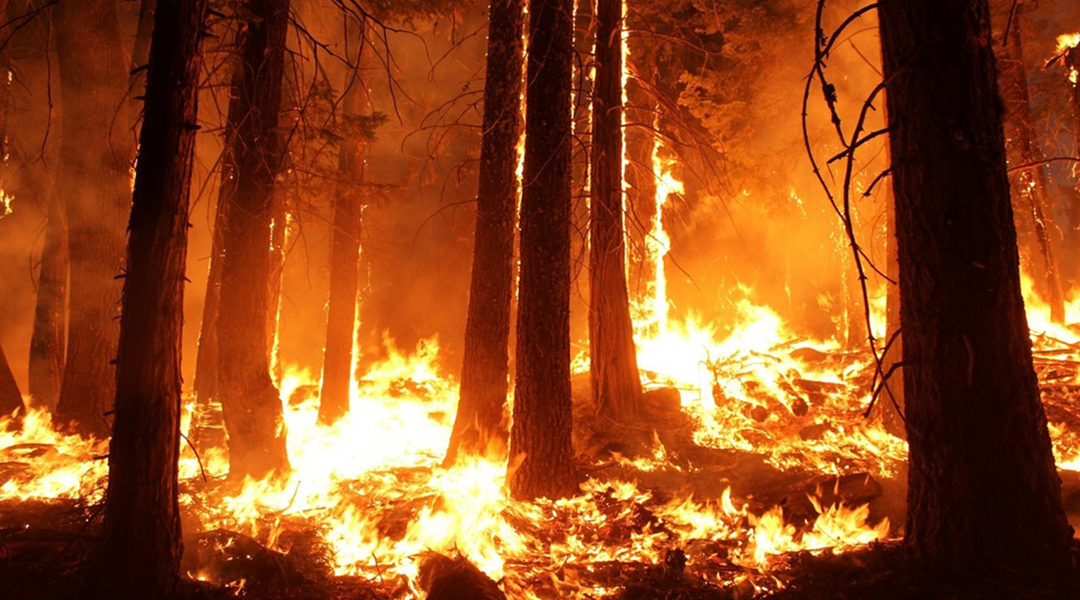 Self-powered forest fire detection