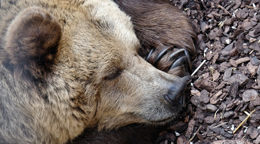 Hibernation – not only for the bears