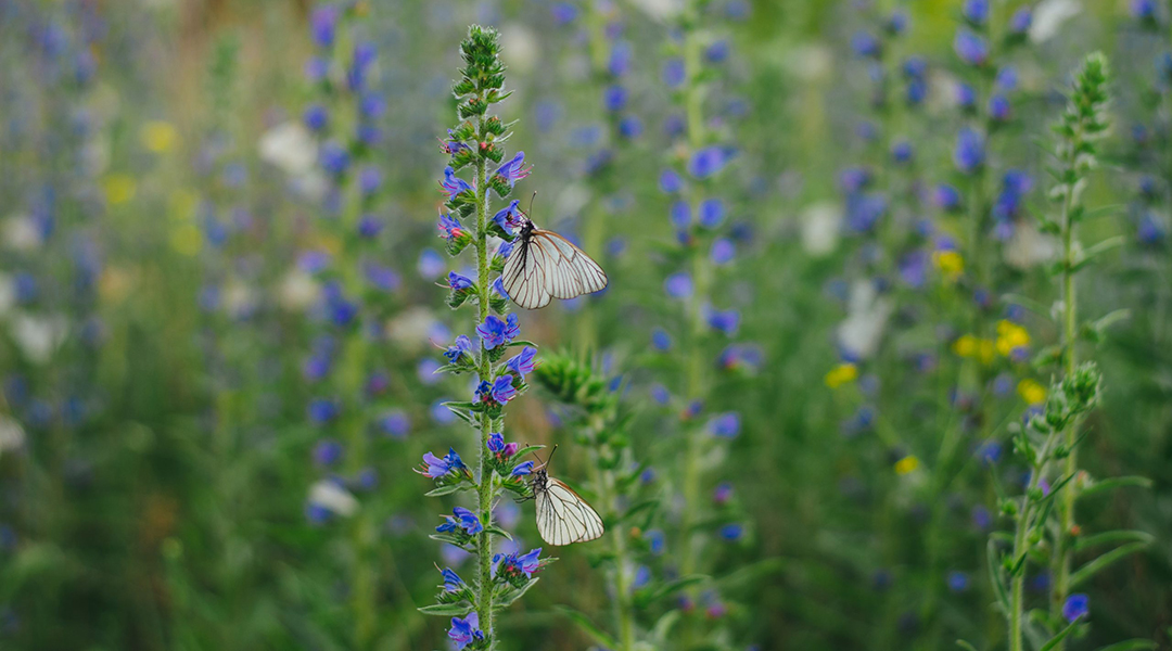 How to help protect butterflies from the impact of global warming