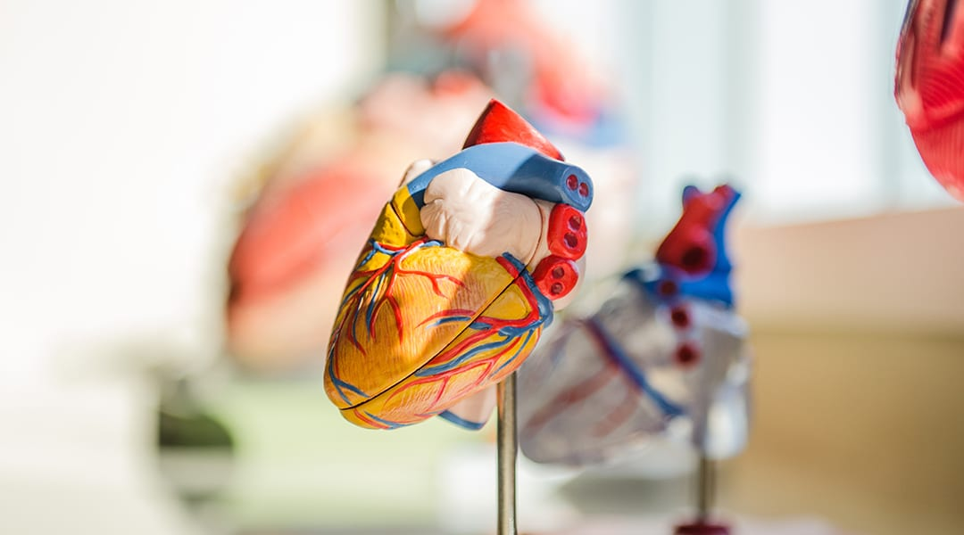 Leveraging the lung's biogenesis to repair the heart