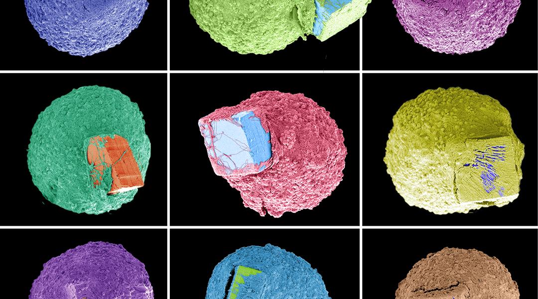 Tiny brain tissue models grown on microchips