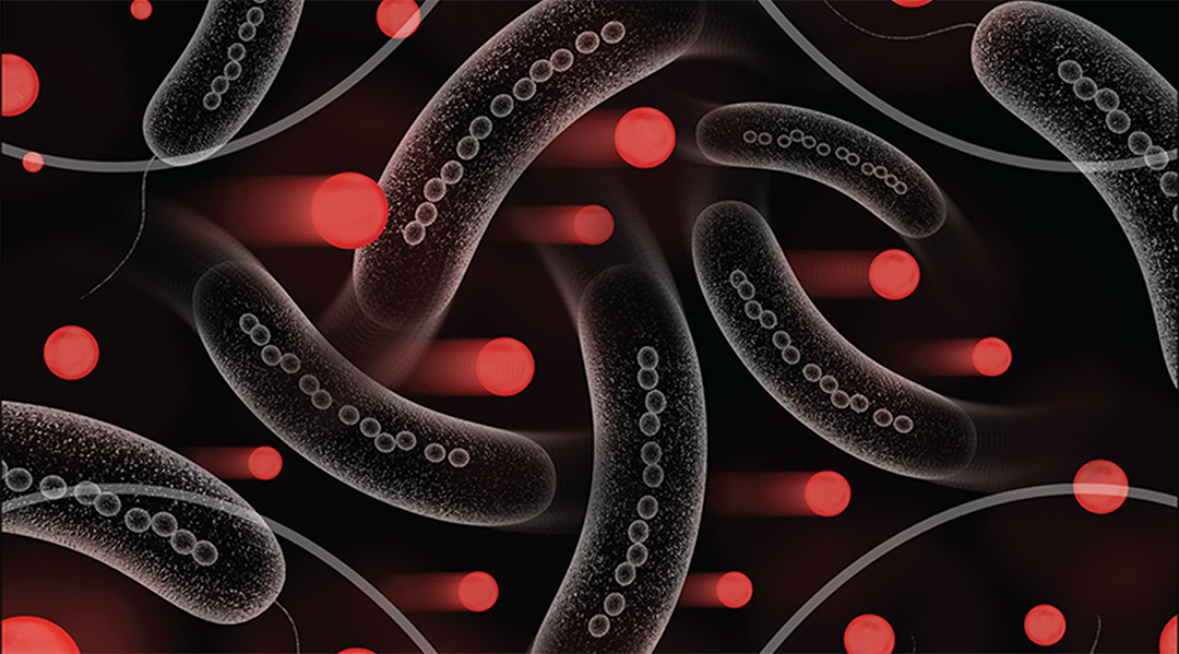 Magnetic bacteria for drug delivery
