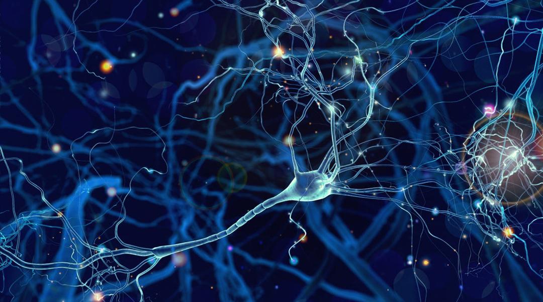 Individualized brain cell grafts reverse Parkinson's symptoms in monkeys