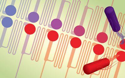 """""""Evolution‐on‐a‐chip"""" device helps reveal mutations that lead to superbugs"""