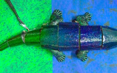A robot in chameleon skin uses nature's active camouflage