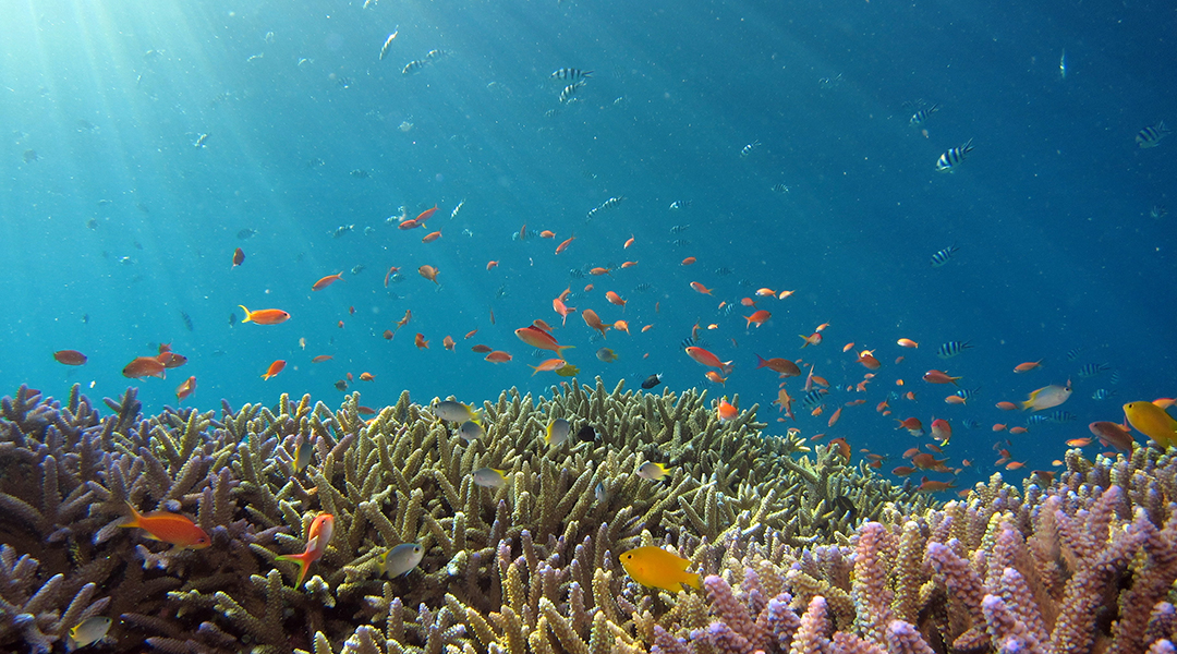 'Sticky questions' raised by study on coral reefs