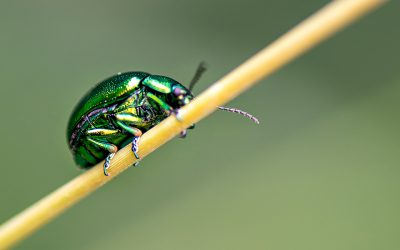 Protective powers of small beetles