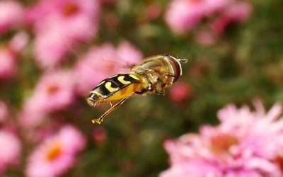 Asynchronous insect flight inspires artificial flyers